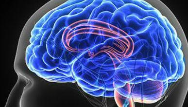Gezonde darmen voor een gezond brein