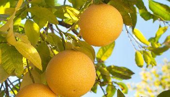 Top 10 voedingssupplementen in Nederland