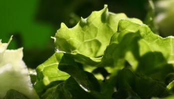 Gezonde vezels in groente, 30 gram per dag