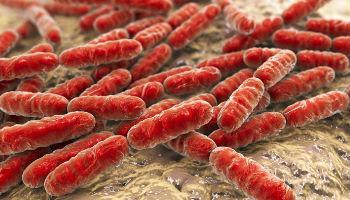 Wat is probiotica