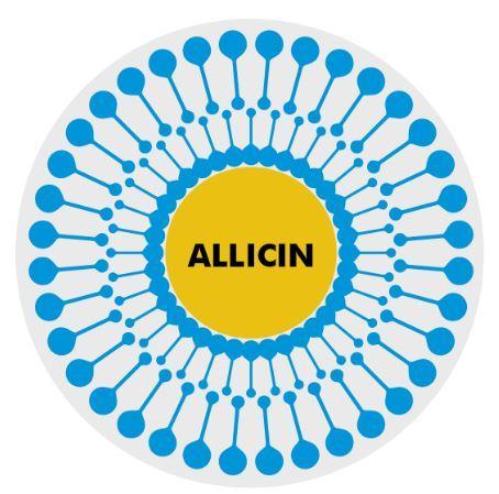 liposomaal allicine uit knoflook