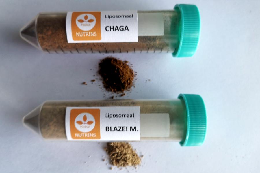 chaga blazei concentraat extract