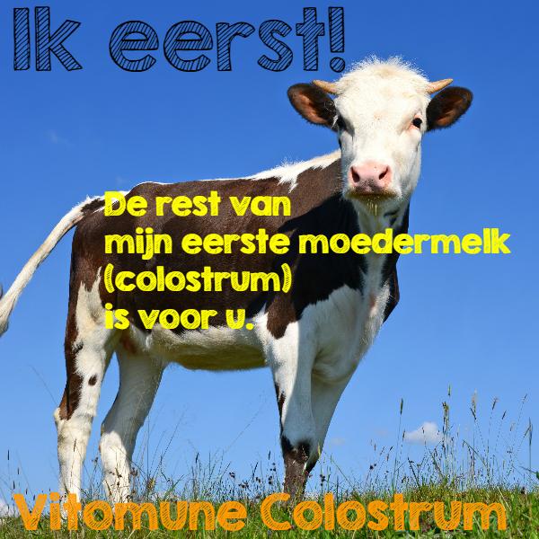 colostrum van Nederlandse koeien in poeder en colostrumcapsules /><br /> <br /> <h2>Colostrum bank</h2> <p>Eerst krijgt het kalf al zijn benodigde voeding (colostrum). Het restant wordt ingevroren om er vitomune colostrum van te maken. Vitomune werkt samen met de colostrum-bank; als er boeren zijn die colostrum nodig hebben voor hun kalfjes kunnen zij een beroep doen op de colostrum-bank.<br /><br />Colostrum is de eerste melk van een koe na de geboorte van een kalf. In de eerste 12 uur na het kalven heeft de moedermelk de hoogste waarden aan IG's. Bij mensen werkt dit op dezelfde manier, na de geboorte van een kind maakt de moeder melk aan, ook bij mensen heet dit colostrum.&nbsp;De colostrum van koeien en mensen is nagenoeg identiek. Colostrum van vitomune heeft het hoge gehalte aan immunoglobulinen; 30-45%&nbsp;</p> <br /> <h2>Weerstand zoals moeder natuur het bedoeld heeft.</h2> <p>Nederlandse colostrum als dagelijks voedingssupplement ondersteunt het immuunsysteem.</p> <p>In Brabant zijn 2 ingenieurs vorig jaar gestart met het verzamelen van overtollige colostrum bij Nederlandse boeren. Deze hoogwaardige colostrum, veel mensen kennen dit als biest, wordt vervolgens in een farmaceutische fabriek ontvet en gevriesdroogd tot een poeder en gecapsuleerd voor humaan gebruik. Er wordt alleen de rijkste (gecontroleerde) colostrum gebruikt van de eerste melking.</p> <p>Colostrum is al eeuwen oud en zeer intensief onderzocht, op het internet zijn ruim 1000 wetenschappelijke publicaties over colostrum te vinden. Wij hebben een inventarisatie (samenvatting) van dit <strong>onderzoek </strong>die wij op verzoek toesturen. Colostrum werd al veelvuldig gebruikt voordat de penicilline werd uitgevonden. Het bevat alle weerstand en informatie voor de nakomeling. Onderzoek in Itali&euml; heeft o.a. aangetoond dat colostrum drie keer zo effectief is als griep-medicatie en drie keer zo goedkoop.</p> <h3>Colostrum samenstelling</h3> <p>Biest is een rijke complexe bron met ruim 150 s