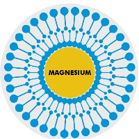 liposomaal magnesium actinovo