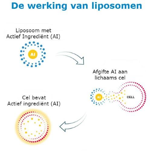 werking van liposomen