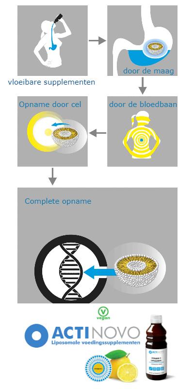 infographic opname liposomale supplementen