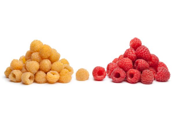 Microbioom en flavonoïden-rijke voeding